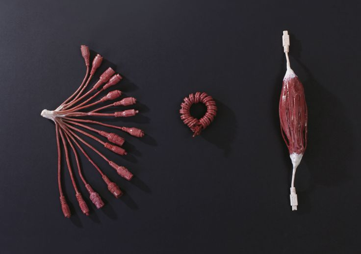 Fiber arrangement - silicone sculpture. Human muscle types sculpted from cords.