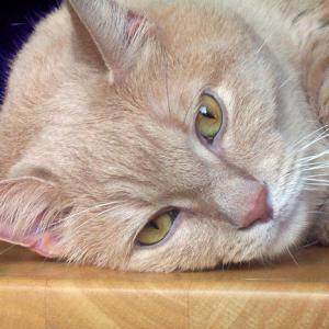 Cómo quitar el olor a pis de gato