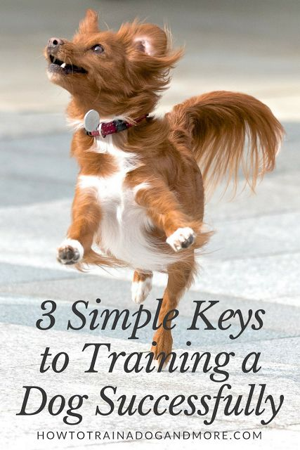 Dog Training Tips:    Are you looking for some simple ways on how to train your dog or puppy successfully?  Here are three simple keys.
