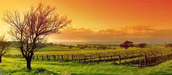 The always gorgeous Hunter Valley is the perfect place for a romantic getaway! Enquire with Gilpin Travel for more!