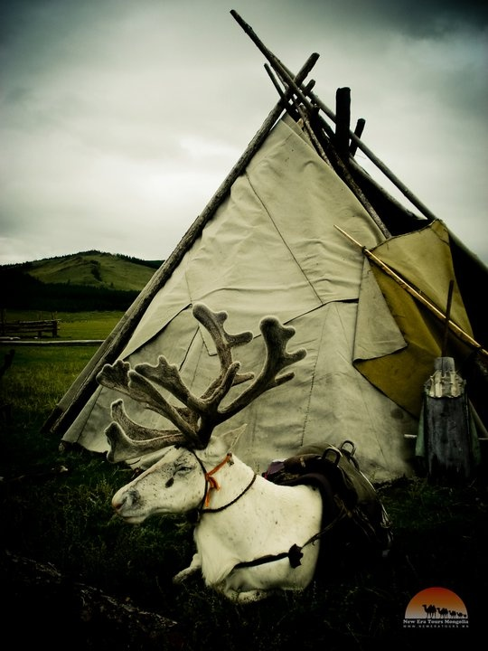 Saami tent. My MtDNA goes back to this oldest of European ancestral groups.
