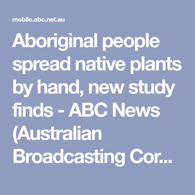 Aboriginal people spread native plants by hand, new study finds - ABC News (Australian Broadcasting Corporation)