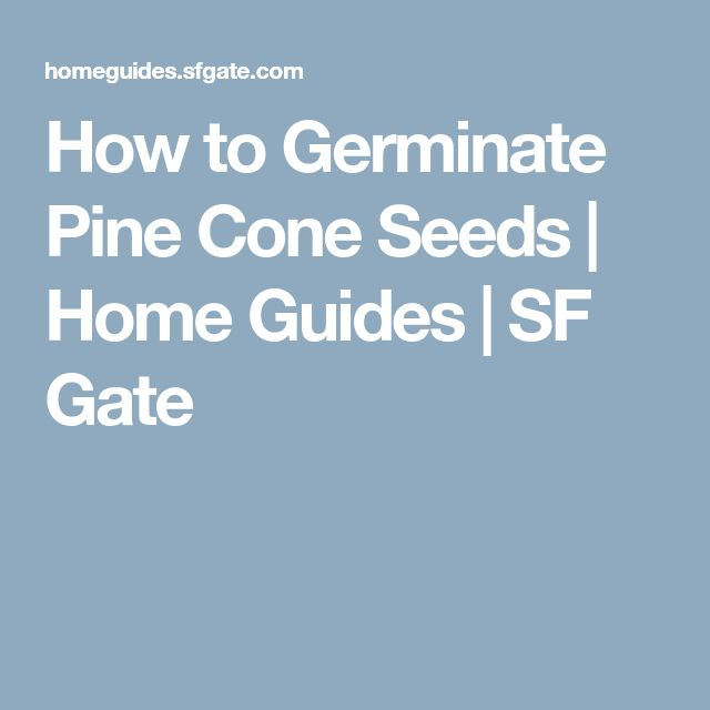 How to Germinate Pine Cone Seeds | Home Guides | SF Gate