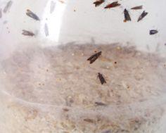 les 25 meilleures id es de la cat gorie larve sur pinterest larve de libellule larve de. Black Bedroom Furniture Sets. Home Design Ideas