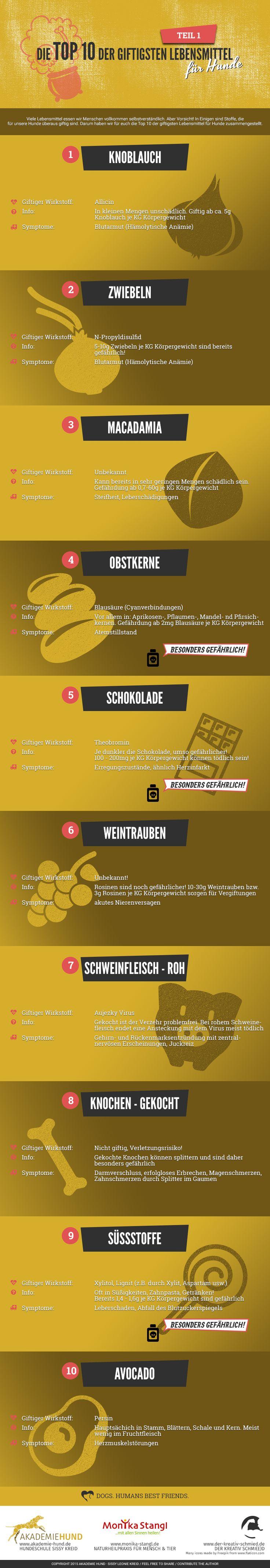 Infografik: 10 giftige Lebensmittel für Hunde