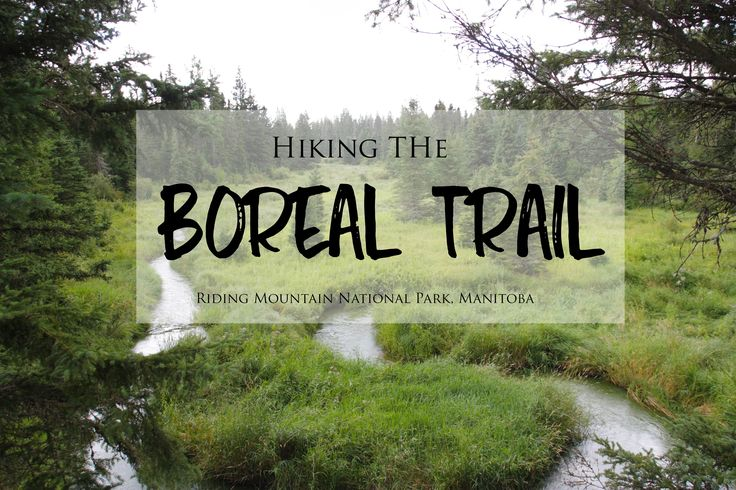 Hiking the Boreal Trail in Manitoba's Riding Mountain National Park | brittanymthiessen.com