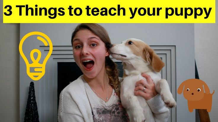 FIRST THINGS TO TEACH YOUR PUPPY - 3 TRICKS