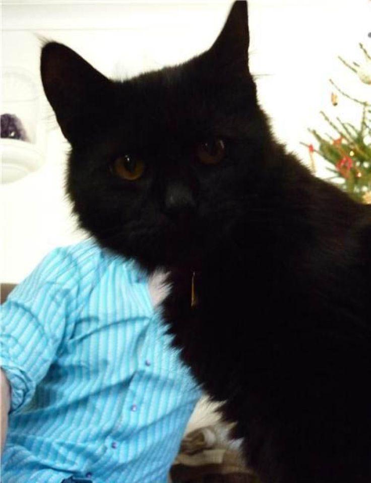 Best PhotoBOMB Images On Pinterest Awkward Family Photos - 20 hilarious cat photobombs