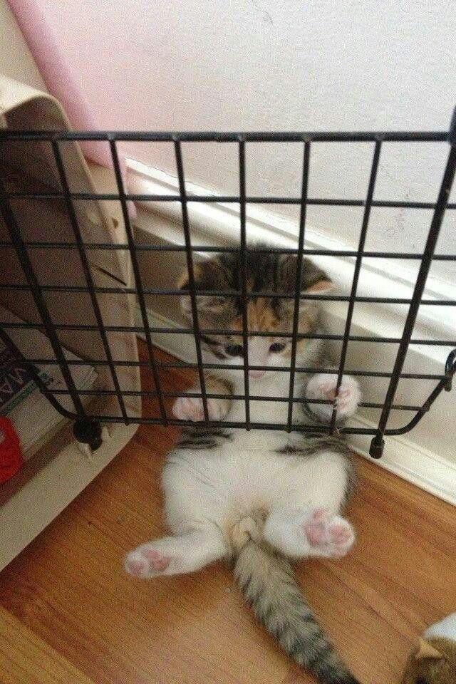 """Help! I'm in jail! I'm innocent I swear."""