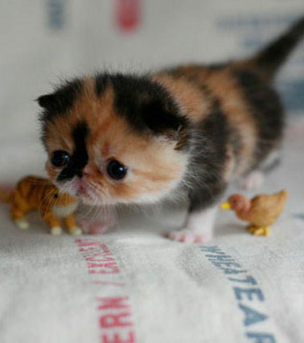 17 parasta ideaa b b chat pinterestiss chat et b b pandapennut ja b b chaton - Photo de bebe chat ...