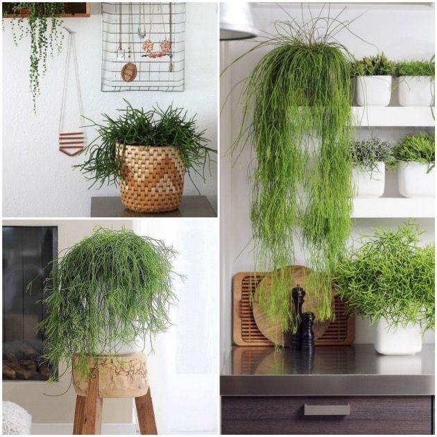 17 best images about vases soliflores fleurs on. Black Bedroom Furniture Sets. Home Design Ideas