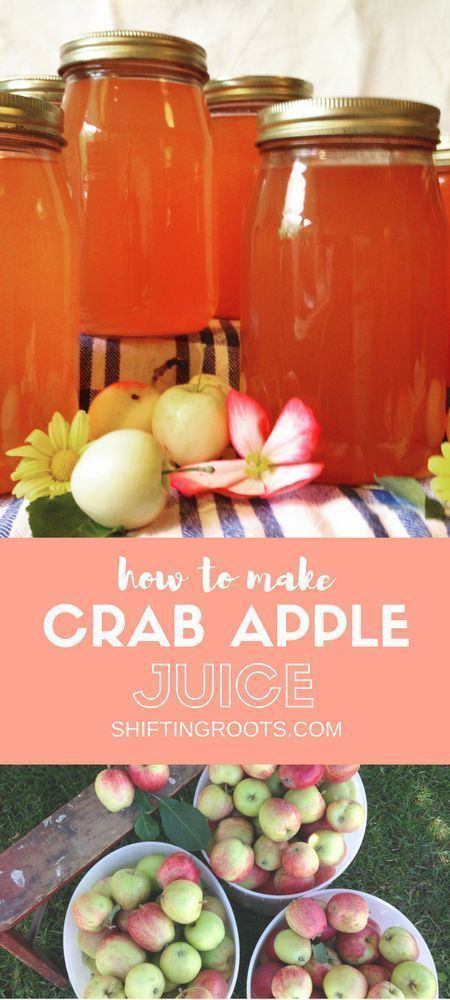 Looking for something to do with your abundance of crab apples? Look no further. Learn how to make crab apple juice to enjoy all year long.