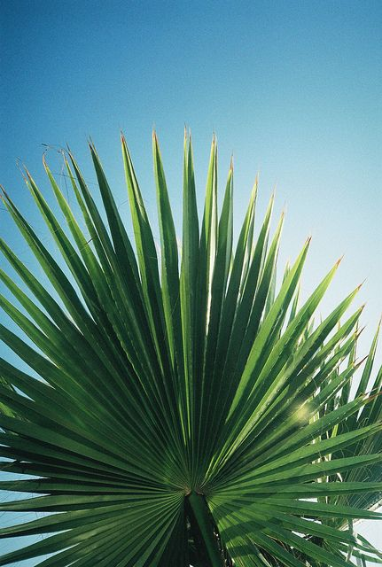 palm fronds tumblr - photo #19
