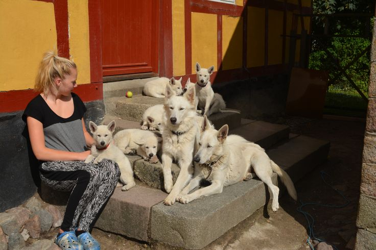 Frutti and the White German Shepards