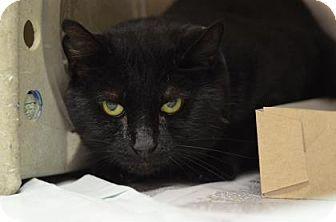 Philadelphia, PA - Domestic Longhair. Meet Nic Nic, a cat for adoption. http://www.adoptapet.com/pet/16972150-philadelphia-pennsylvania-cat