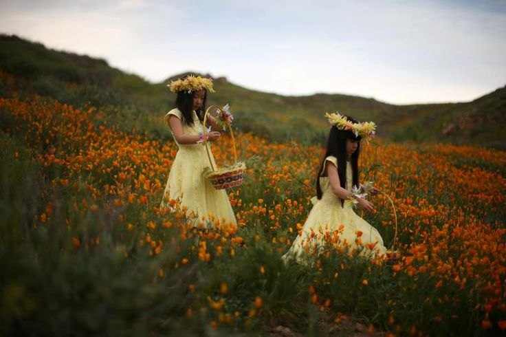 Julia Lu, 5, (L) and Amy Liu, 5, walk through a massive spring wildflower bloom caused by a wet winter in Lake Elsinore, California. REUTERS/Lucy Nicholson