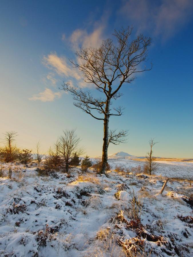 Tall Tree   Scotland