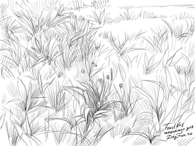 How to draw grass step by step 3