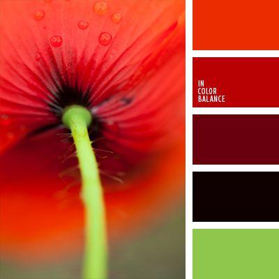 red poppy color inspiration color combination color pallets color palettes color scheme