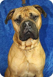 Top Dog Pet Care Jackson Mi