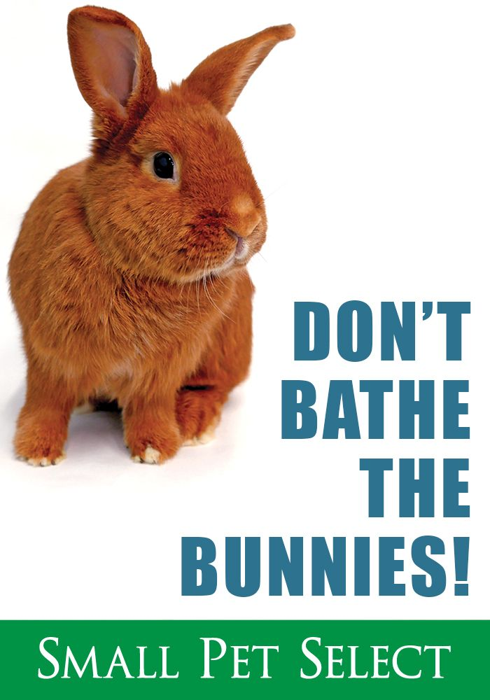 Here Is Why You Should Never Bathe Your Bunny Can You Bathe A