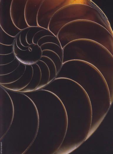 Fractal spiral, Fibonacci.