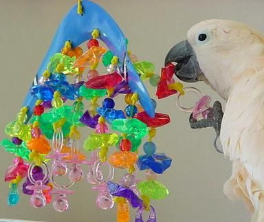 COCKATOO TOYS