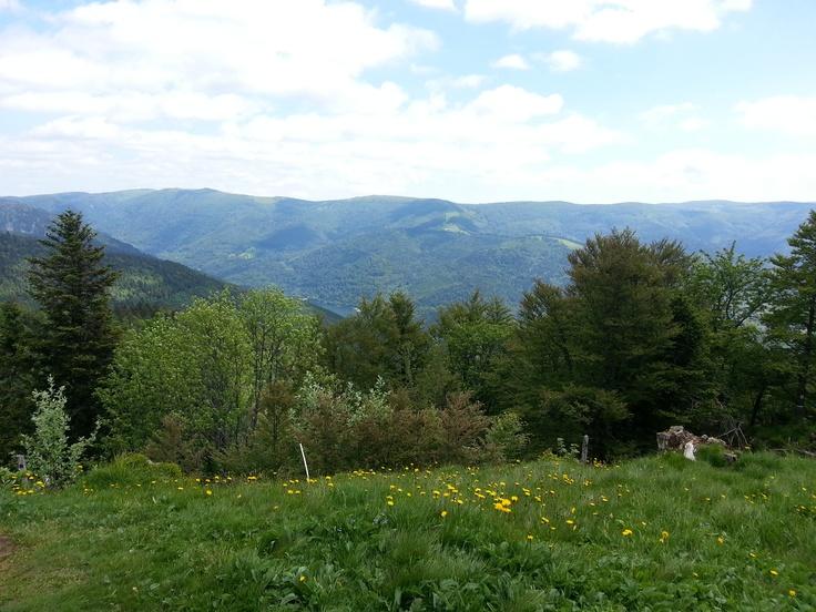 Montagne de La Bresse - Ventron (Vosges 88)