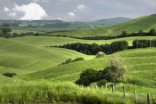 Campi di grano - Campos de trigo en municipio de Asciano, Siena, Toscana, Italia by ricsen, via Flickr
