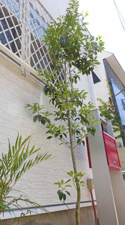 日陰の庭に向く植物38種類とシェードガーデンのデザイン例 2020