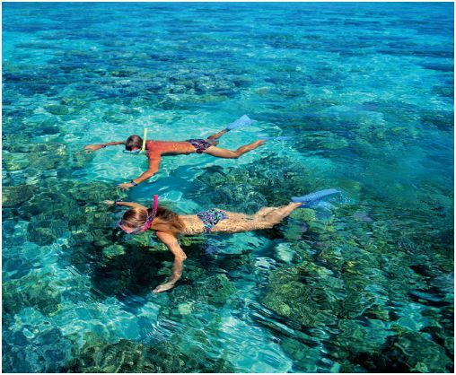 Snorkel in Key West, FL to see North America's only living coral reef formations.