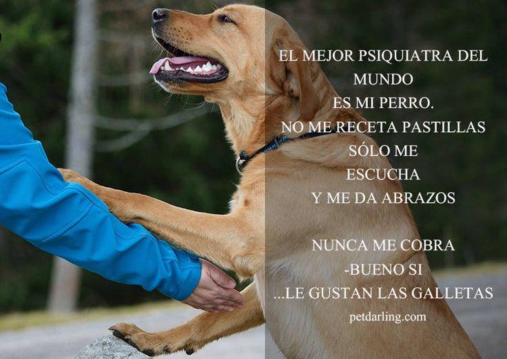 Frases sobre perros - PetDarling