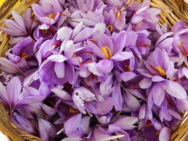 saffron #zafferano #recipe #ricettedisardegna #sardegna #sardinia