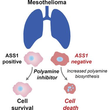 July 2016: synthetic lethal treatment for mesothelioma. Cell Rep. M. Locke, Centre for Molecular Oncology (Dr Sarah Martin)