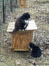 Shenandoah Valley cats unchained thanks to Alley Cat Allies and partners