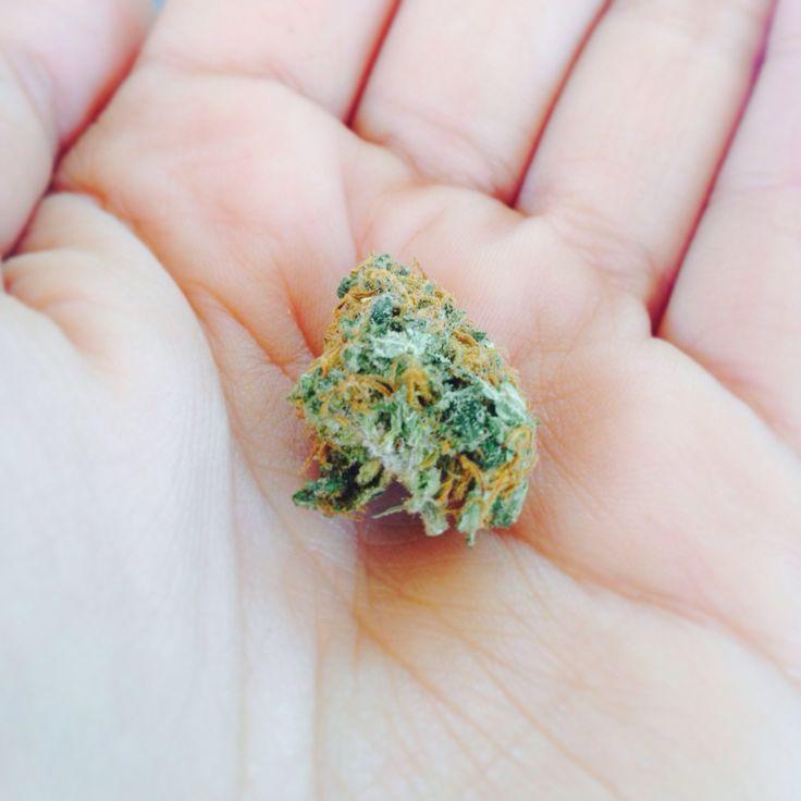 Cogollo pequeño y resinoso. #cogollo #cannabis #stoner #joint #420 #710 #spain420 #highlife #marihuana #ganja