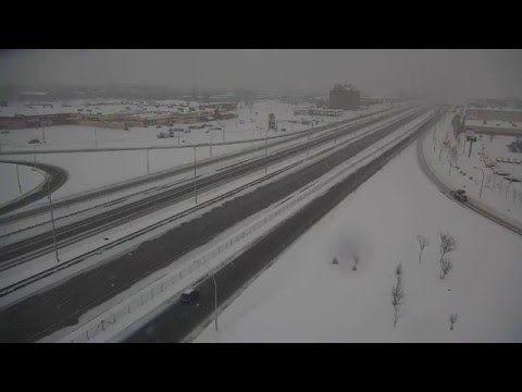 Canada: gufo delle nevi ripreso da telecamera - Spettegolando