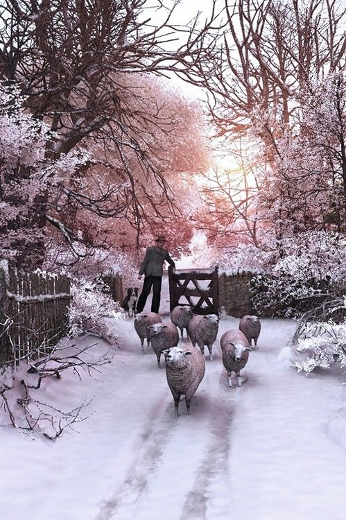 """My sheep hear my voice, and I know them, and they follow me."". John 10:27  Luke 15:6-7 ""And when he cometh home, he calleth together his friends and neighbours, saying unto them, Rejoice with me; for I have found my sheep which was lost. I say unto you, that likewise joy shall be in heaven over one sinner that repenteth, more than over ninety and nine just persons, which need no repentance."""