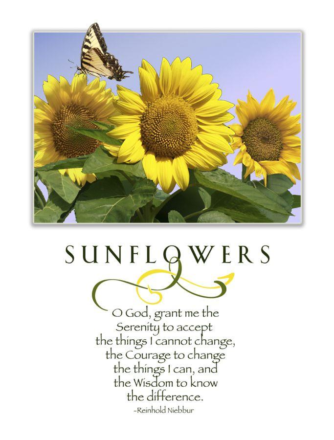 202 best sunflowers make me smile images on pinterest. Black Bedroom Furniture Sets. Home Design Ideas