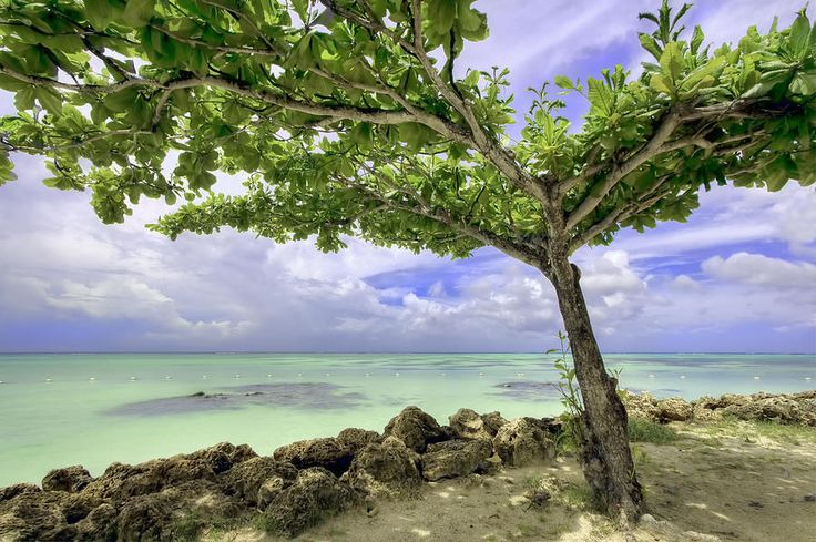 Tobago the paradise Island in the Caribbean by Nadia Sanowar