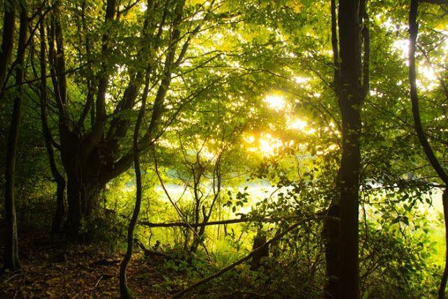 Le Domaine du Martinaa: L'automne en Normandie