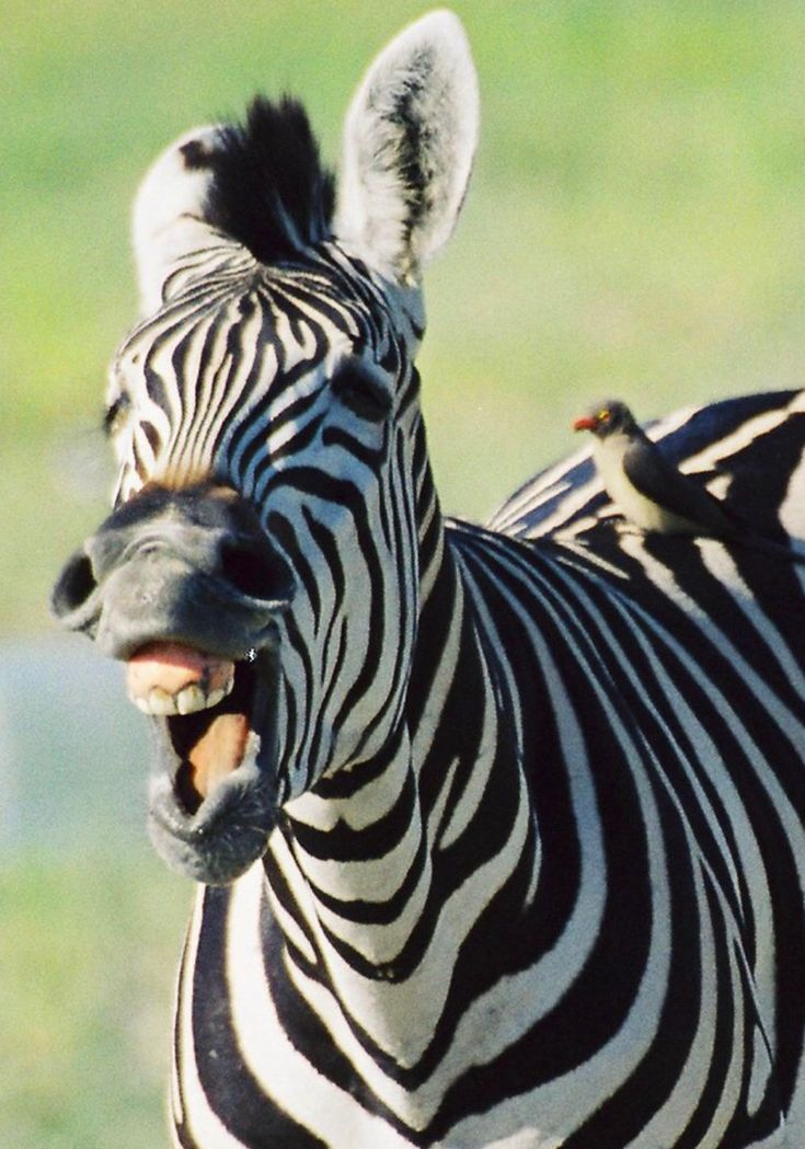 демотиватор с зеброй отношения детей