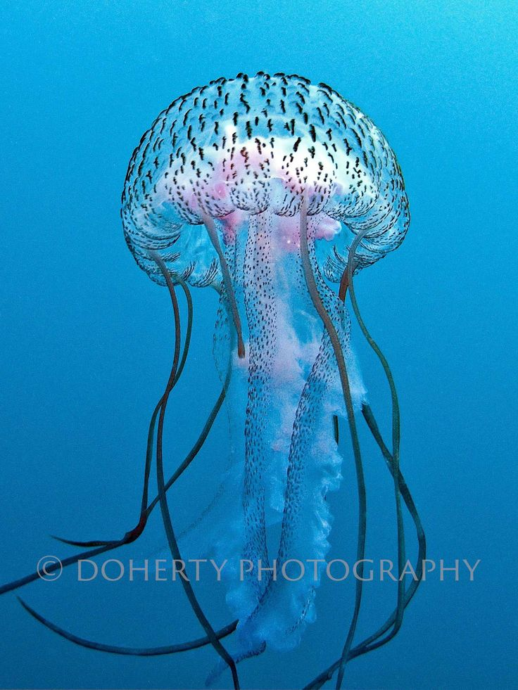 17 best ideas about jellyfish crafts on pinterest for Jelly fish art