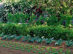 Vous disposez d'un coin de jardin à l'ombre et souhaitez installer un potager ? Retrouvez les conseils de nos experts pour réussir ce défi !