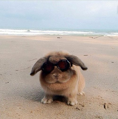 Beach Bun...  OMG!  I wonder if my buns would love the beach?