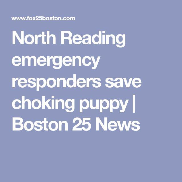 North Reading emergency responders save choking puppy | Boston 25 News