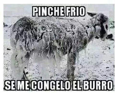 Pinche frio