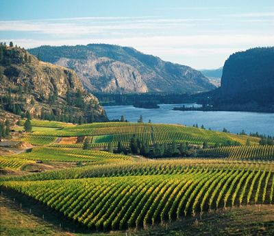 Kewlona BC - The Okanagan Valley is like a little bit of European Countryside dropped down into Canada -- Curated by: Nicola's Laser Studio | #102-1289 Ellis Street Kelowna BC V1Y 9X6 | 2508625152
