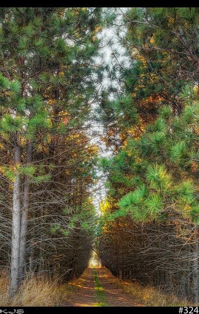 Woods  324/365
