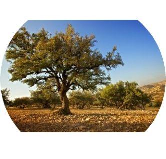 Pretios si cu o valoare inestimabila in industria frumusetii, istoria uleiului de #argan sau aurul galben lichid pare desprinsa din basmele celor 1001 de nopti. Eficacitatea sa a fost dovedita timp de secole, iar pretioasele sale virtuti ofera frumusete si relaxare celor care stiu sa il foloseasca inteligent.  Originea este arborele de argan (Argania spinosa), care creste doar in regiunea de sud-vest a Marocului, Essaouira-Agadir. Utilizat de femei timp de secole pentru numeroasele sale…